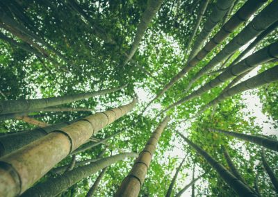 Unlocking private capital for the forest and sustainable land use sector