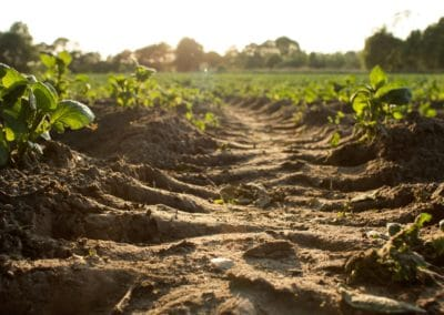 Promoting innovative business models in food and land use in Sub-Saharan Africa
